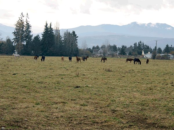 Image of 0000 W Hendrickson Rd., Sequim