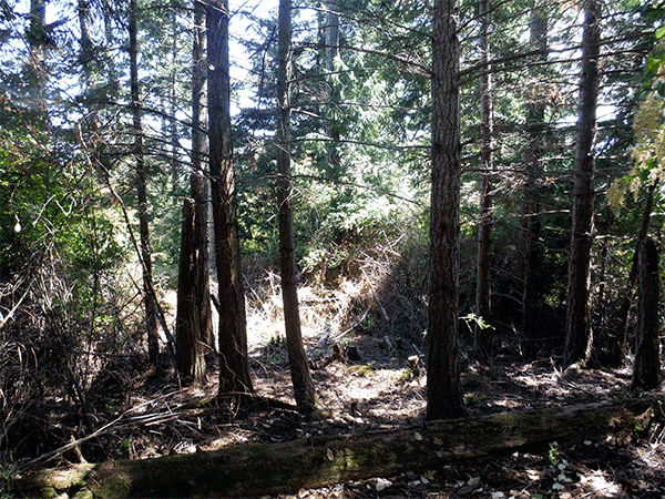 Image of Lot 21 Block 4 Diamond Point Road, Sequim